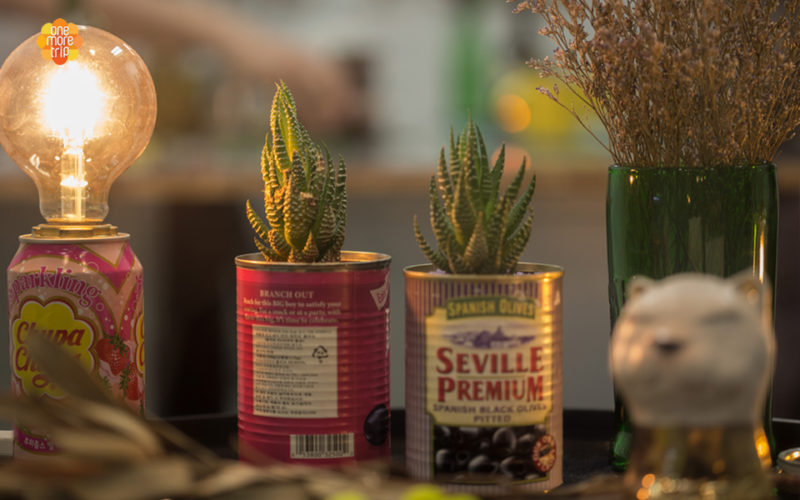 upcycling succulent light
